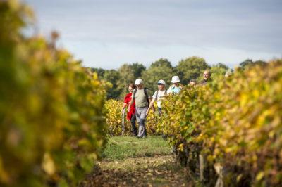 Randonnées dans les vignes - C. CHIGOT