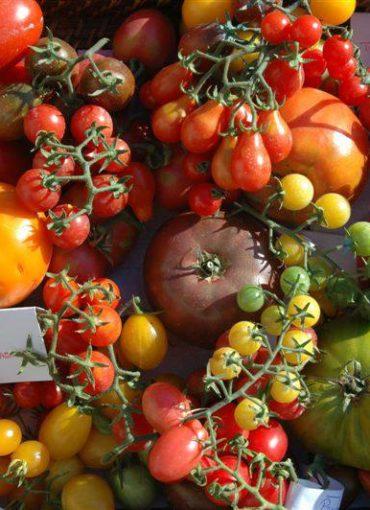 Variétés de tomates du Château de la Bourdaisière à Montlouis