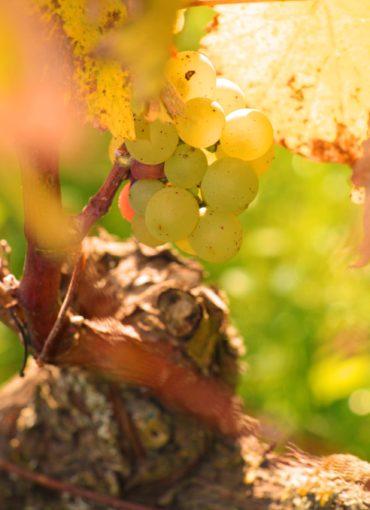 vins- val de loire-touraine-vouvray-montlouis-amboise