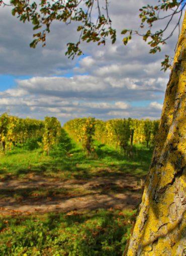 vins-val de loire- vouvray-montlouis-touraine