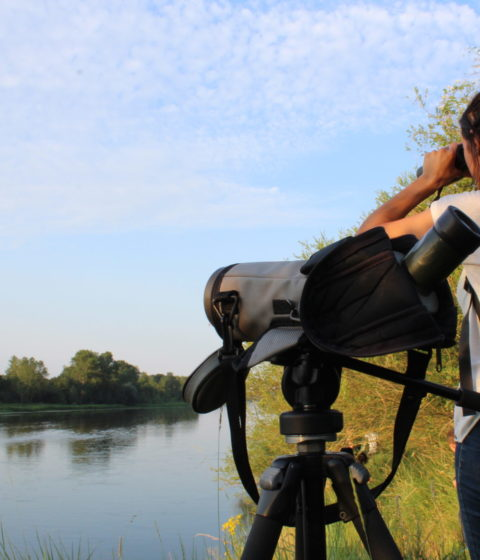 Se connecter à la nature en bord de Loire