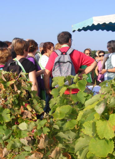 Vignes vins randos val de loire à Chancay