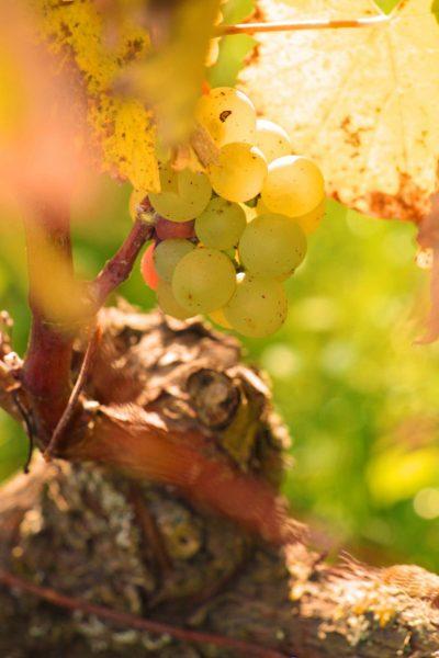 Découvrez nos vignobles et nos vins