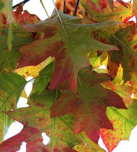 Feuille aux couleurs de l'automne