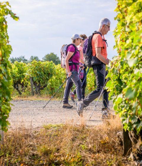 randonnée dans les vignes de l'AOC Vouvray